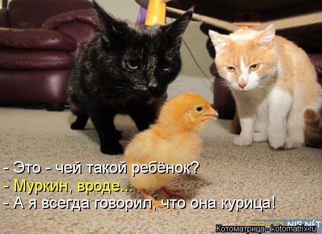 Котоматрица: - Это - чей такой ребёнок? - Муркин, вроде... - А я всегда говорил, что она курица!