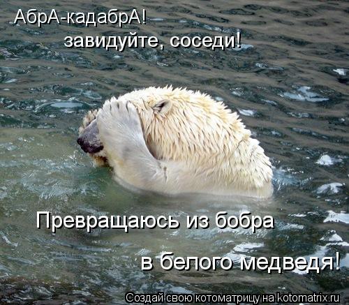 Котоматрица: абрА-кадабрА! АбрА-кадабрА! завидуйте, соседи! Превращаюсь из бобра в белого медведя!