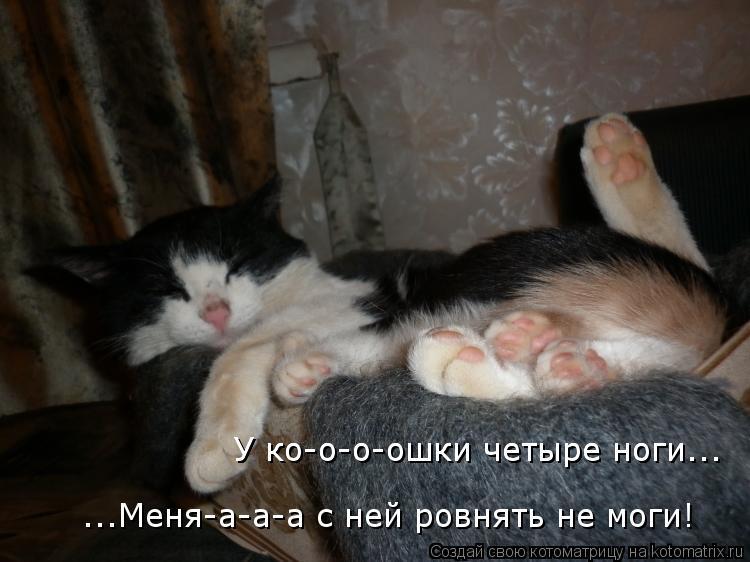 Котоматрица: ...Меня-а-а-а с ней ровнять не моги! У ко-о-о-ошки четыре ноги... У ко-о-о-ошки четыре ноги...