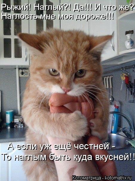 Котоматрица: Рыжий! Наглый?! Да!!! И что же?! Наглость мне моя дороже!!! А если уж ещё честней - То наглым быть куда вкусней!!!