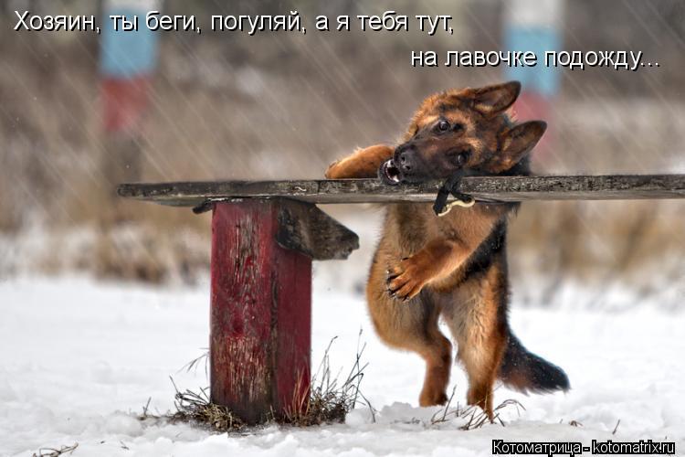 Котоматрица: Хозяин, ты беги, погуляй, а я тебя тут, на лавочке подожду...