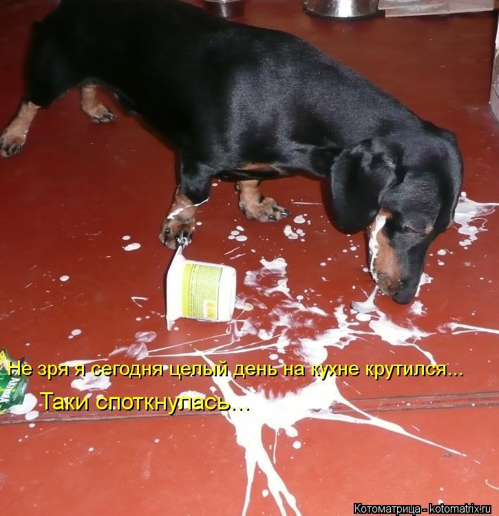 Котоматрица: Не зря я сегодня целый день на кухне крутился... Таки споткнулась...
