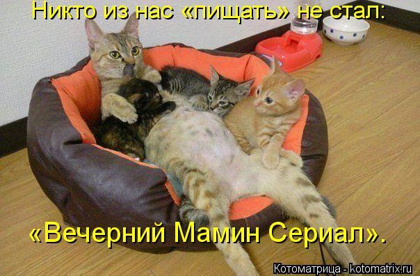Котоматрица: Никто из нас «пищать» не стал: «Вечерний Мамин Сериал».