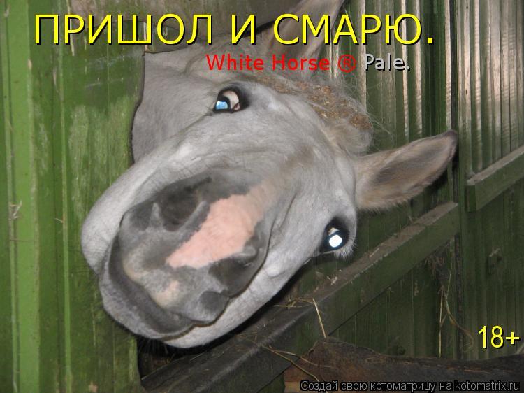 Котоматрица: ПРИШОЛ И СМАРЮ. White Horse ® Pale. 18+