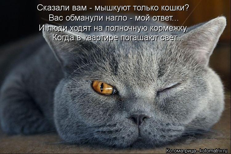 Котоматрица: Сказали вам - мышкуют только кошки? Вас обманули нагло - мой ответ... И люди ходят на полночную кормежку, Когда в квартире погашают свет...