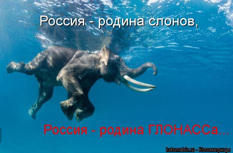 Котоматрица: Россия - родина слонов, Россия - родина ГЛОНАССа...