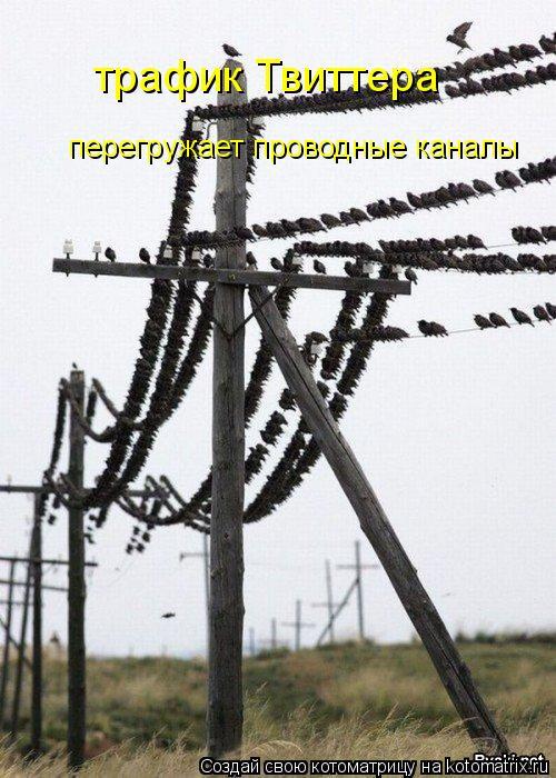 Котоматрица: трафик Твиттера перегружает проводные каналы