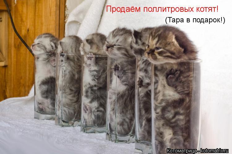 Котоматрица: Продаём поллитровых котят! (Тара в подарок!)
