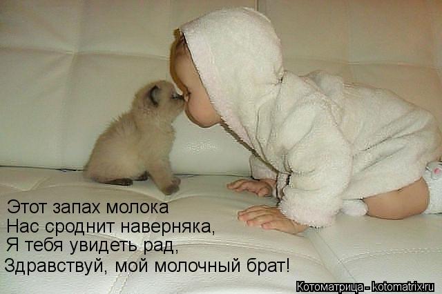 Котоматрица: Этот запах молока Нас сроднит наверняка, Я тебя увидеть рад, Здравствуй, мой молочный брат!