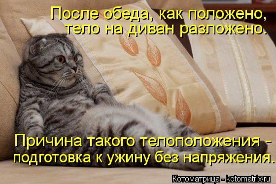 Котоматрица: После обеда, как положено,  тело на диван разложено. Причина такого телоположения -  подготовка к ужину без напряжения.