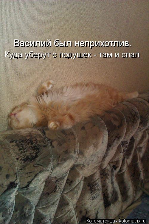 Котоматрица: Куда уберут с подушек - там и спал. Василий был неприхотлив.