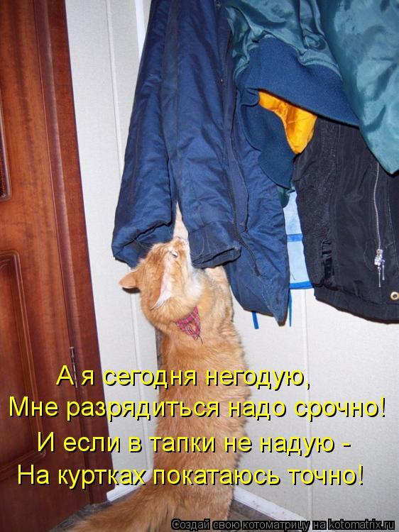 Котоматрица: Мне разрядиться надо срочно! И если в тапки не надую - На куртках покатаюсь точно! А я сегодня негодую,