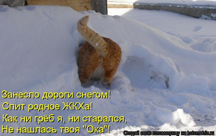 """Котоматрица: Занесло дороги снегом! Спит родное ЖКХа! Не нашлась твоя """"Ока""""! Как ни грёб я, ни старался,"""