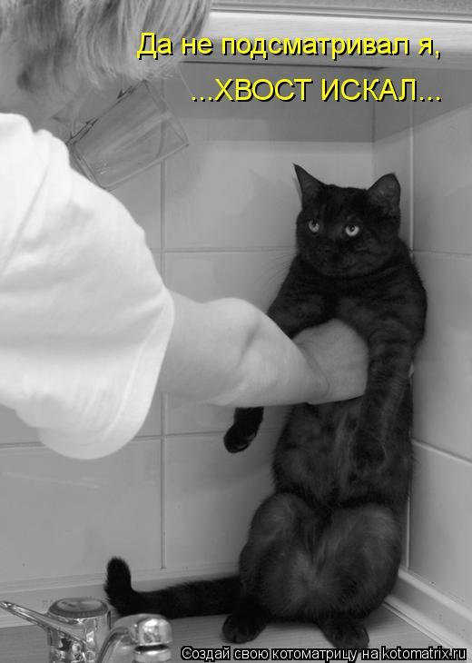 Котоматрица: Да не подсматривал я, ...ХВОСТ ИСКАЛ...