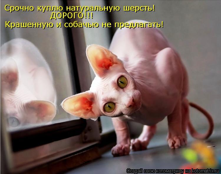 Котоматрица: Срочно куплю натуральную шерсть! Крашенную и собачью не предлагать! ДОРОГО!!!