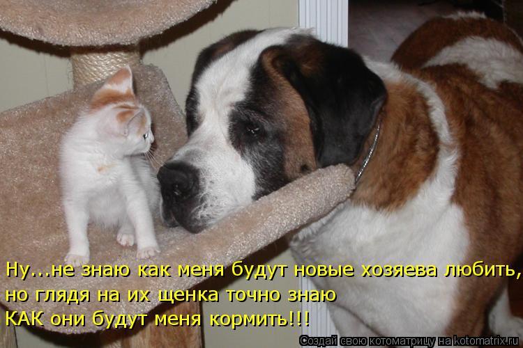 Котоматрица: Ну...не знаю как меня будут новые хозяева любить, но глядя на их щенка точно знаю  КАК они будут меня кормить!!!