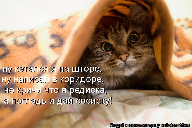Котоматрица: ну катался я на шторе, ну написал в коридоре, не кричи что я редиска, а погладь и дай сосиску!