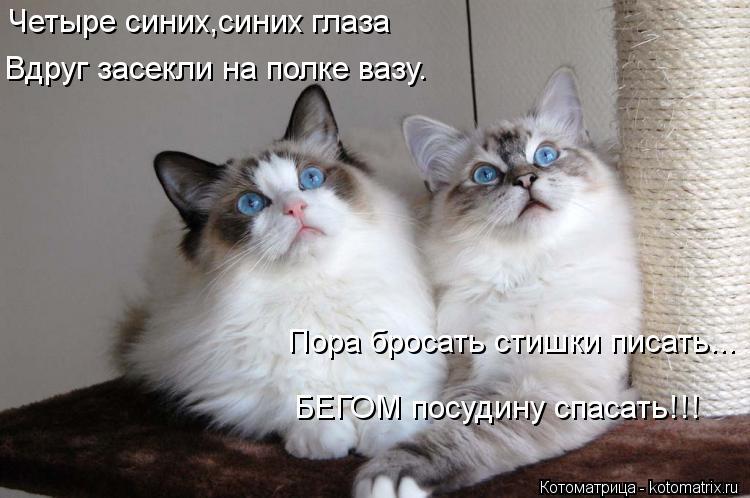 Котоматрица: Четыре синих,синих глаза Вдруг засекли на полке вазу. Пора бросать стишки писать... БЕГОМ посудину спасать!!!