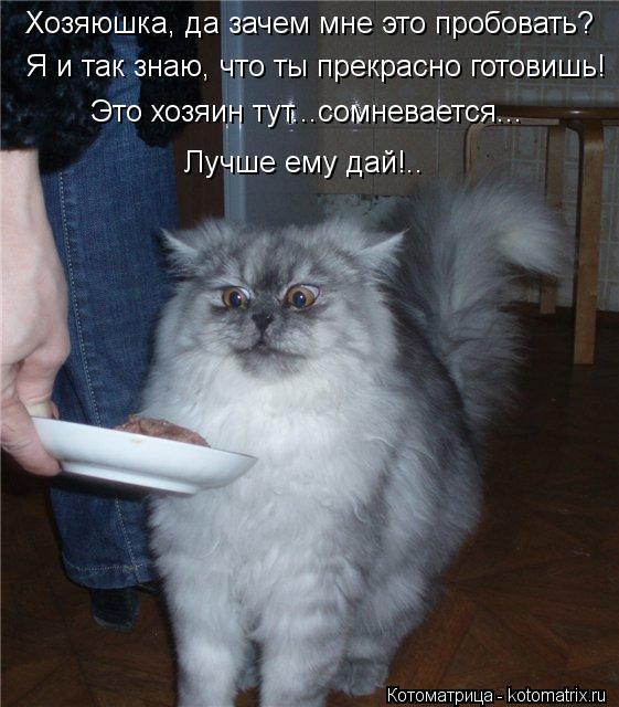 Котоматрица: Хозяюшка, да зачем мне это пробовать? Это хозяин тут...сомневается... Лучше ему дай!.. Я и так знаю, что ты прекрасно готовишь!