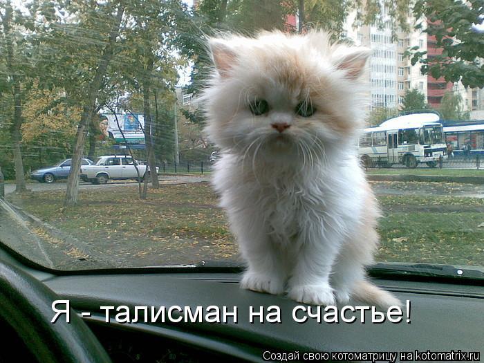 Котоматрица: Я - талисман на счастье!