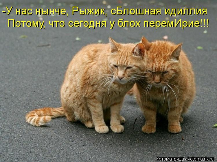 Котоматрица: -У нас нынче, Рыжик, сБлошная идиллия Потому, что сегодня у блох перемИрие!!!