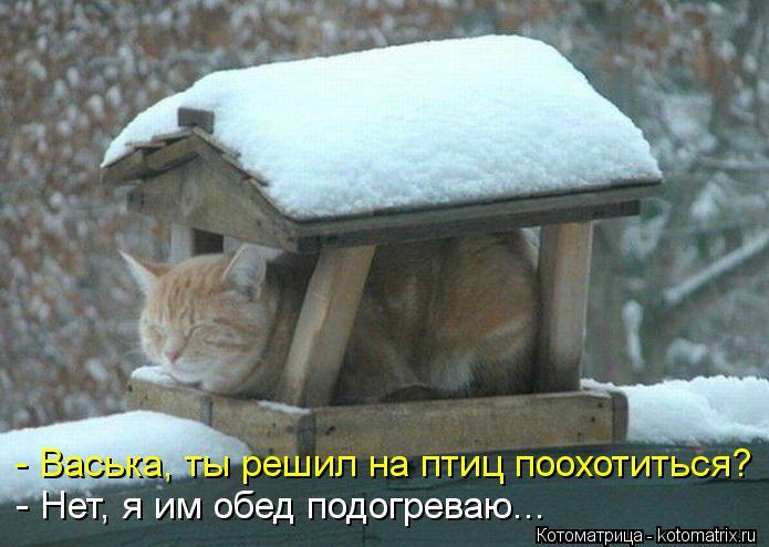 Котоматрица: - Васька, ты решил на птиц поохотиться? - Нет, я им обед подогреваю...