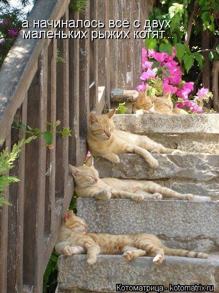 Котоматрица: а начиналось всё с двух маленьких рыжих котят...
