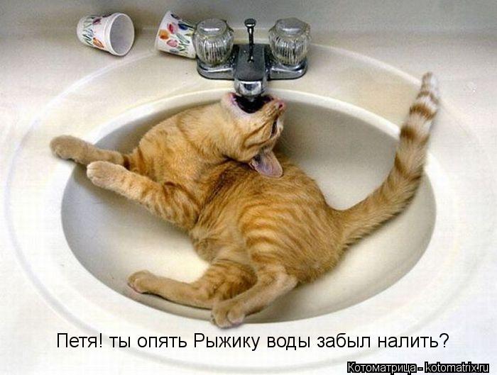 Котоматрица: Петя! ты опять Рыжику воды забыл налить?