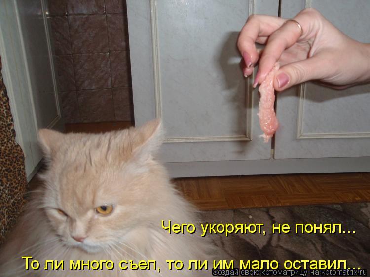 Котоматрица: Чего укоряют, не понял... То ли много съел, то ли им мало оставил...