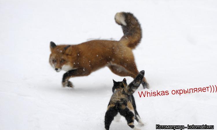 Котоматрица: Whiskas окрыляяет)))