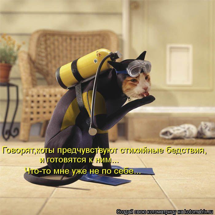Котоматрица: Говорят,коты предчувствуют стихийные бедствия, и готовятся к ним... Что-то мне уже не по себе...