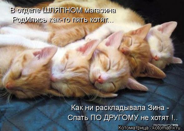 Котоматрица: В отделе ШЛЯПНОМ магазина РодИлись как-то пять котят... Как ни раскладывала Зина - Спать ПО ДРУГОМУ не хотят !..