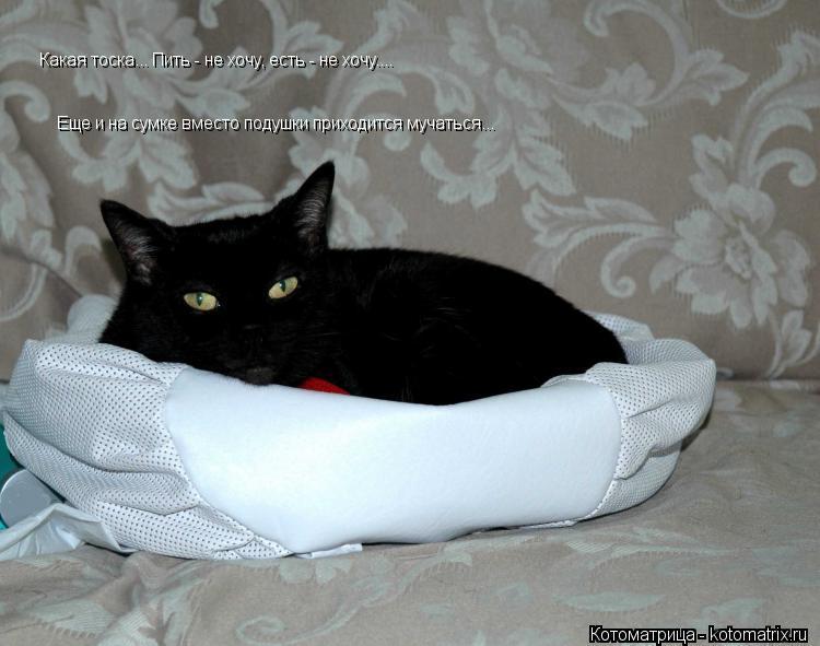 Котоматрица: Какая тоска... Пить - не хочу, есть - не хочу.... Еще и на сумке вместо подушки приходится мучаться...
