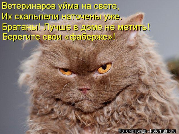 Котоматрица: Ветеринаров уйма на свете, Их скальпели наточены уже. Берегите свои «фаберже»! Братаны! Лучше в доме не метить!