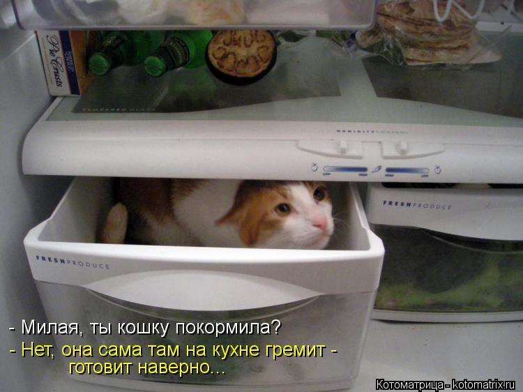 Котоматрица: - Милая, ты кошку покормила? - Нет, она сама там на кухне гремит - готовит наверно...