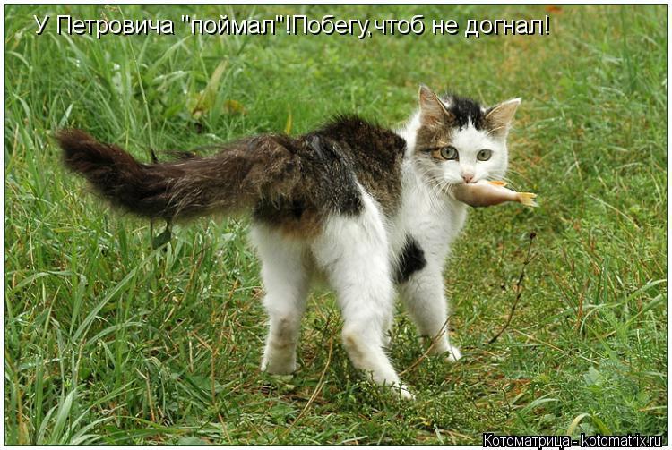 "Котоматрица: У Петровича ""поймал""!Побегу,чтоб не догнал!"