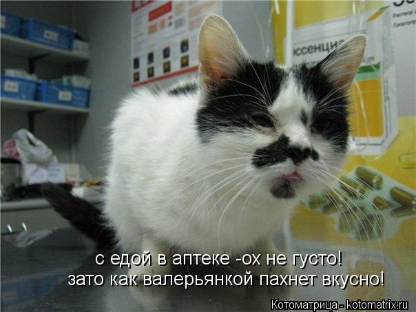 Котоматрица: с едой в аптеке -ох не густо! зато как валерьянкой пахнет вкусно!