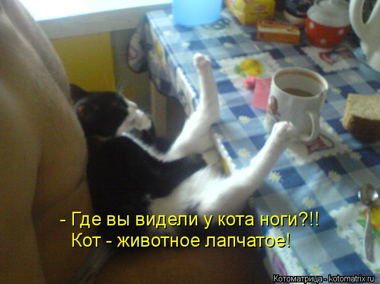 Котоматрица: - Где вы видели у кота ноги?!! Кот - животное лапчатое!