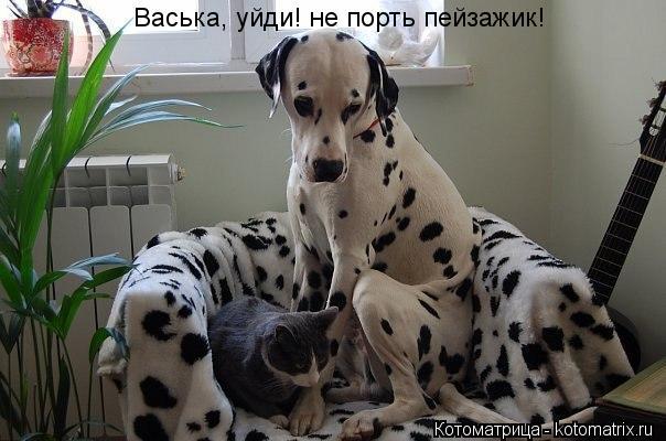 Котоматрица: Васька, уйди! не порть пейзажик!