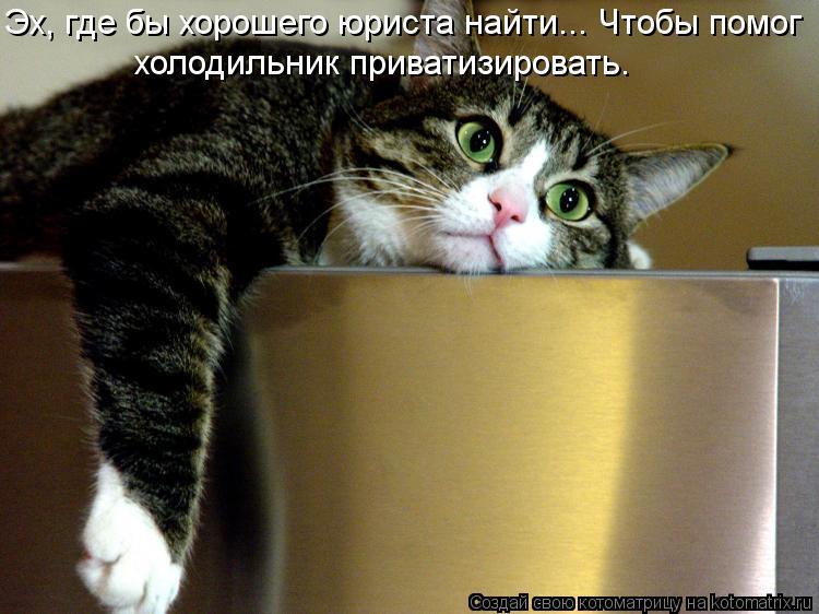 Котоматрица: Эх, где бы хорошего юриста найти... Чтобы помог  холодильник приватизировать.