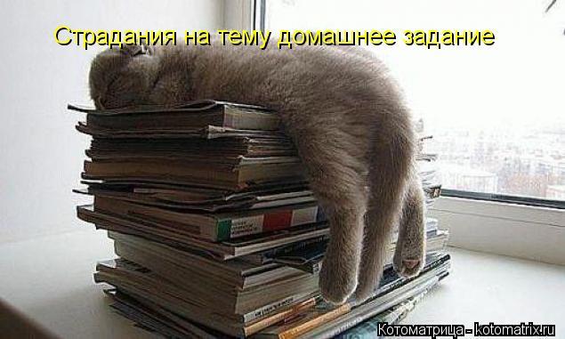 Котоматрица: Страдания на тему домашнее задание