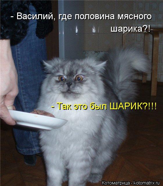 Котоматрица: - Василий, где половина мясного шарика?! - Так это был ШАРИК?!!!