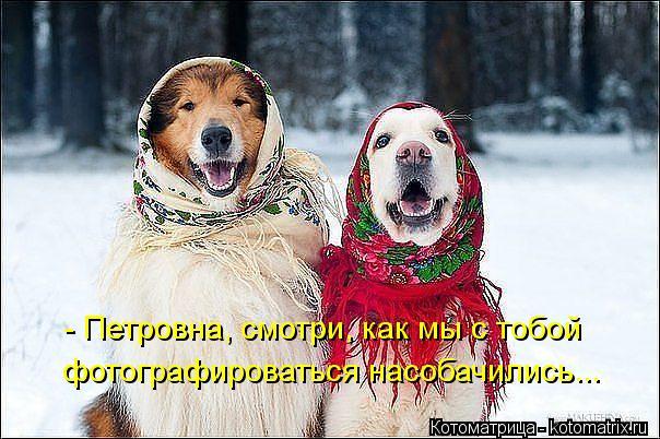 Котоматрица: - Петровна, смотри, как мы с тобой фотографироваться насобачились...