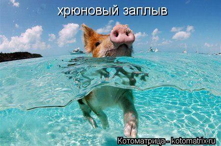 Котоматрица: хрюновый заплыв