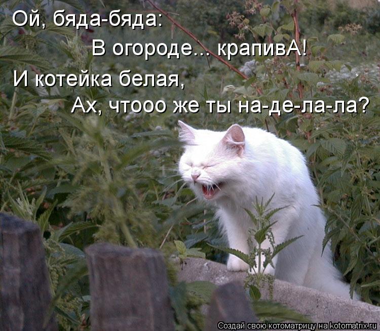 Котоматрица: Ой, бяда-бяда: В огороде... крапивА! И котейка белая, Ах, чтооо же ты на-де-ла-ла?