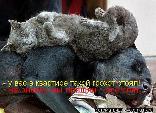 Котоматрица: - у вас в квартире такой грохот стоял - у вас в квартире такой грохот стоял! - не знаем, мы пришли - все спят...