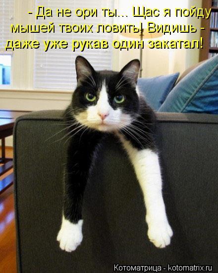 Котоматрица: - Да не ори ты... Щас я пойду мышей твоих ловить! Видишь - даже уже рукав один закатал!