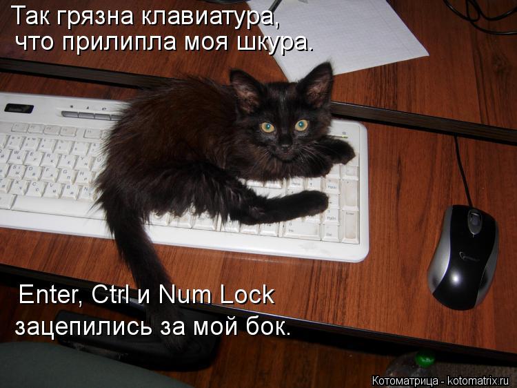 Котоматрица: Так грязна клавиатура, что прилипла моя шкура. Enter, Ctrl и Num Lock зацепились за мой бок.