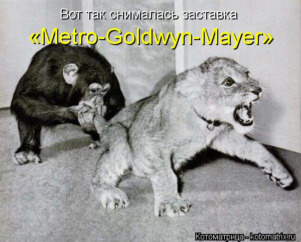 Котоматрица: Вот так снималась заставка  «Metro-Goldwyn-Mayer»