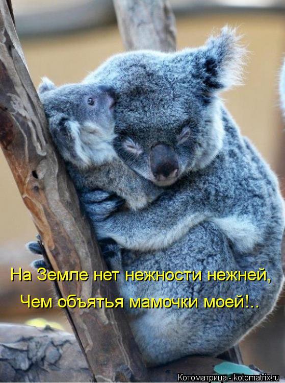 Котоматрица: На Земле нет нежности нежней, Чем объятья мамочки моей!..